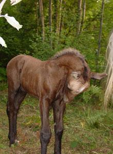 Paard en coach for Paard aan huis te koop